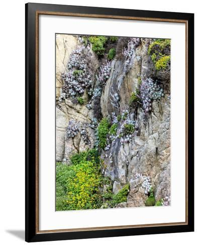 Flowers as Cliff Hangers. Garrapata State Park, Big Sur, California, USA-Tom Norring-Framed Art Print