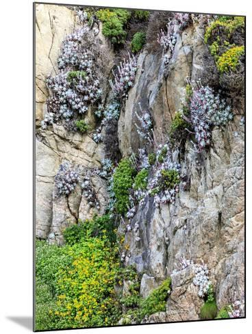 Flowers as Cliff Hangers. Garrapata State Park, Big Sur, California, USA-Tom Norring-Mounted Photographic Print