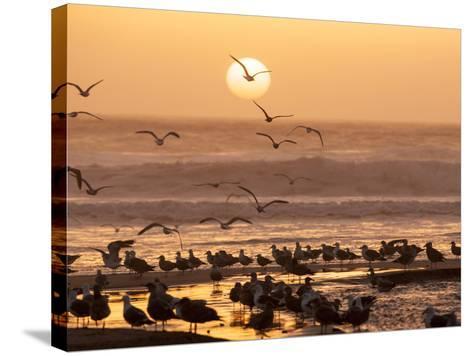 Sea Birds on Beach, Sun Setting in Mist, Santa Cruz Coast, California, USA,-Tom Norring-Stretched Canvas Print