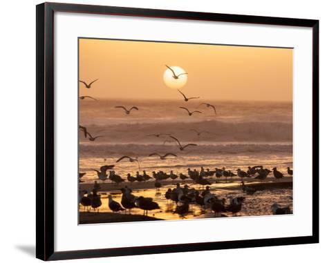 Sea Birds on Beach, Sun Setting in Mist, Santa Cruz Coast, California, USA,-Tom Norring-Framed Art Print