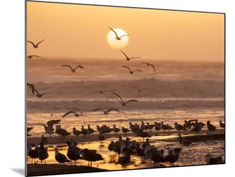 Sea Birds on Beach, Sun Setting in Mist, Santa Cruz Coast, California, USA,-Tom Norring-Mounted Photographic Print