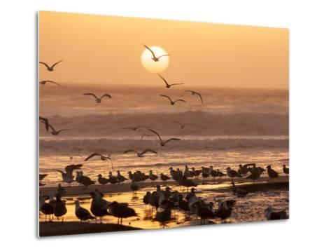 Sea Birds on Beach, Sun Setting in Mist, Santa Cruz Coast, California, USA,-Tom Norring-Metal Print