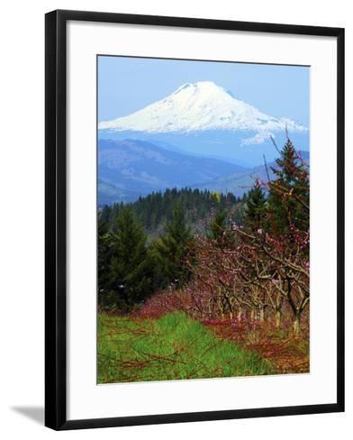 Peach Blossoms, Hood River, Oregon, USA-Michel Hersen-Framed Art Print
