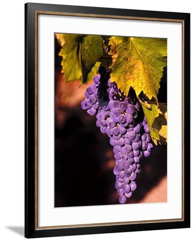 Walla Walla Wine Country, Walla Walla, Washington, USA-Richard Duval-Framed Art Print