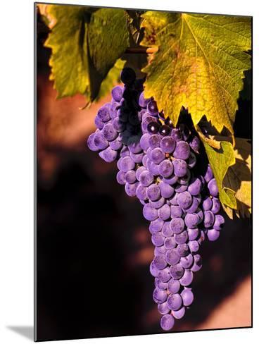 Walla Walla Wine Country, Walla Walla, Washington, USA-Richard Duval-Mounted Photographic Print