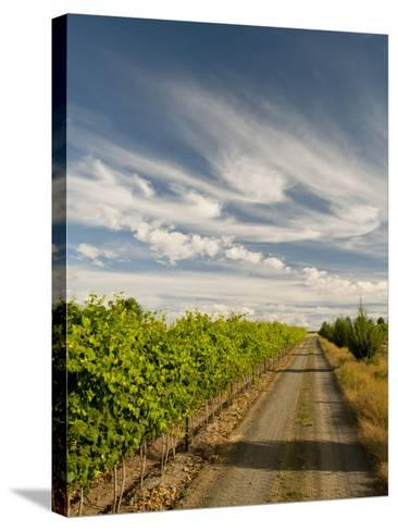 Vineyard and Road, Walla Walla, Washington, USA-Richard Duval-Stretched Canvas Print