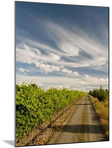 Vineyard and Road, Walla Walla, Washington, USA-Richard Duval-Mounted Photographic Print