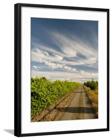 Vineyard and Road, Walla Walla, Washington, USA-Richard Duval-Framed Art Print