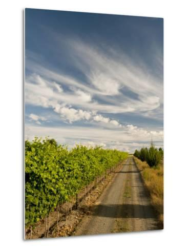 Vineyard and Road, Walla Walla, Washington, USA-Richard Duval-Metal Print