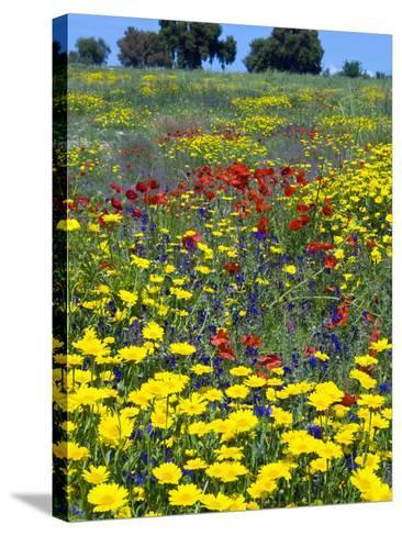 Blossom in a Field, Siena Province, Tuscany, Italy-Nico Tondini-Stretched Canvas Print