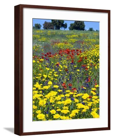 Blossom in a Field, Siena Province, Tuscany, Italy-Nico Tondini-Framed Art Print