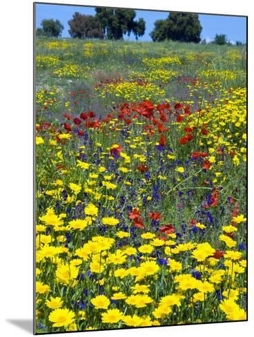 Blossom in a Field, Siena Province, Tuscany, Italy-Nico Tondini-Mounted Photographic Print
