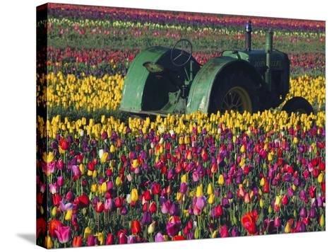 Tractor in the Tulip Field, Tulip Festival, Woodburn, Oregon, USA-Michel Hersen-Stretched Canvas Print