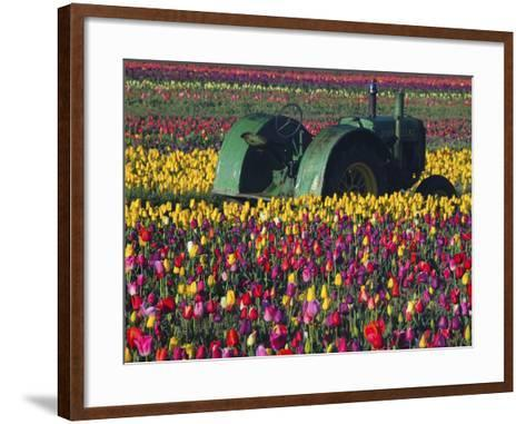 Tractor in the Tulip Field, Tulip Festival, Woodburn, Oregon, USA-Michel Hersen-Framed Art Print