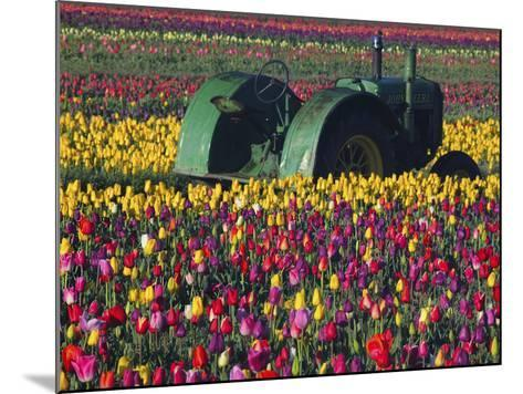 Tractor in the Tulip Field, Tulip Festival, Woodburn, Oregon, USA-Michel Hersen-Mounted Photographic Print
