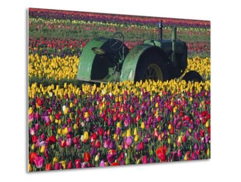 Tractor in the Tulip Field, Tulip Festival, Woodburn, Oregon, USA-Michel Hersen-Metal Print