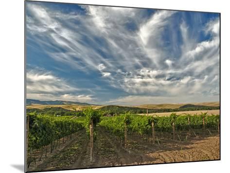 Vineyard of Walla Walla Vintners, Walla Walla, Washington, USA-Richard Duval-Mounted Photographic Print