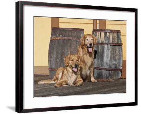 Two Golden Retrievers Next to Two Wooden Barrels on a Wooden Deck-Zandria Muench Beraldo-Framed Art Print