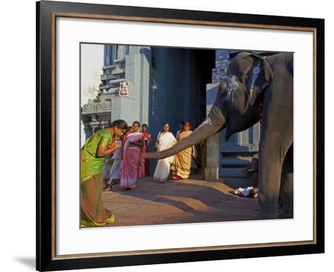 Elephant Benediction, Kamakshi Amman, Kanchipuram, Tamil Nadu, India, Asia-Tuul-Framed Art Print