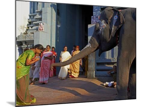 Elephant Benediction, Kamakshi Amman, Kanchipuram, Tamil Nadu, India, Asia-Tuul-Mounted Photographic Print