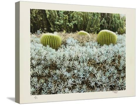 California Cactus Garden 1975-Theo Westenberger-Stretched Canvas Print