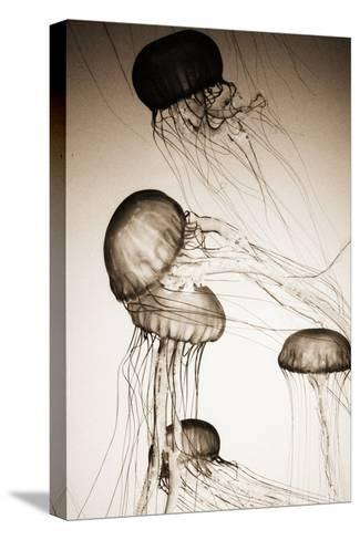 Jellyfish in Motion 2-Theo Westenberger-Stretched Canvas Print
