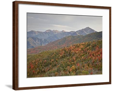 Red and Orange Fall Colors in the Wasatch Mountains, Uinta National Forest, Utah, USA-James Hager-Framed Art Print