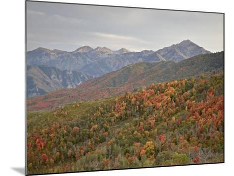 Red and Orange Fall Colors in the Wasatch Mountains, Uinta National Forest, Utah, USA-James Hager-Mounted Photographic Print