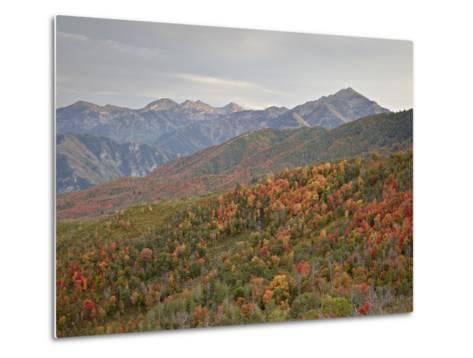 Red and Orange Fall Colors in the Wasatch Mountains, Uinta National Forest, Utah, USA-James Hager-Metal Print