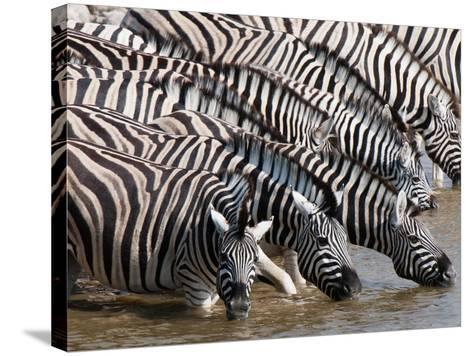 Burchell's Zebra (Equus Burchellii), Etosha National Park, Namibia, Africa-Sergio Pitamitz-Stretched Canvas Print