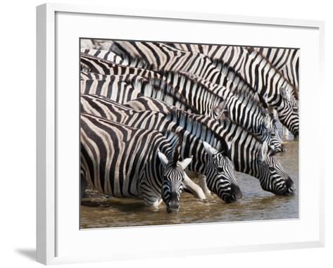 Burchell's Zebra (Equus Burchellii), Etosha National Park, Namibia, Africa-Sergio Pitamitz-Framed Art Print