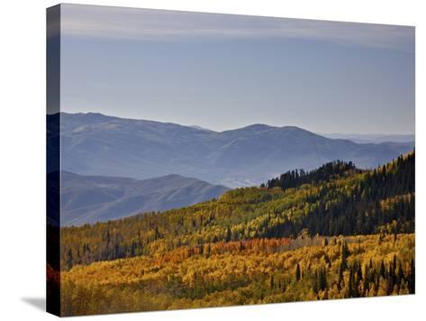 Yellow and Orange Aspens in the Fall, Wasatch Mountain State Park, Utah, USA, North America-James Hager-Stretched Canvas Print