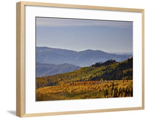 Yellow and Orange Aspens in the Fall, Wasatch Mountain State Park, Utah, USA, North America-James Hager-Framed Art Print