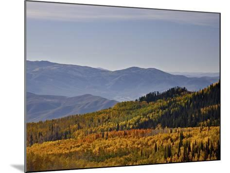 Yellow and Orange Aspens in the Fall, Wasatch Mountain State Park, Utah, USA, North America-James Hager-Mounted Photographic Print