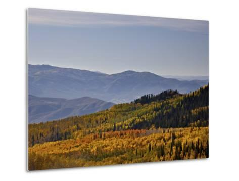Yellow and Orange Aspens in the Fall, Wasatch Mountain State Park, Utah, USA, North America-James Hager-Metal Print