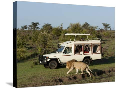 Lion (Panthera Leo) and Safari Vehicle, Masai Mara, Kenya, East Africa, Africa-Sergio Pitamitz-Stretched Canvas Print