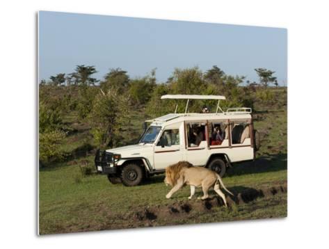 Lion (Panthera Leo) and Safari Vehicle, Masai Mara, Kenya, East Africa, Africa-Sergio Pitamitz-Metal Print