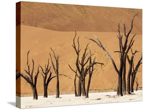 Dead Trees, Deadvlei, Sossusvlei, Namib Naukluft Park, Namib Desert, Namibia, Africa-Sergio Pitamitz-Stretched Canvas Print