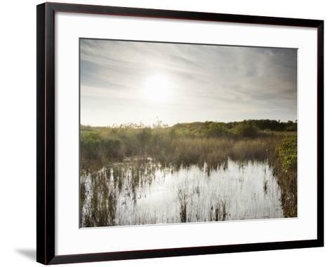 Everglades National Park, UNESCO World Heritage Site, Florida, USA, North America-Angelo Cavalli-Framed Art Print