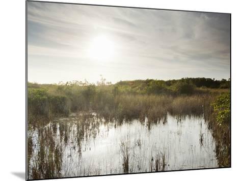 Everglades National Park, UNESCO World Heritage Site, Florida, USA, North America-Angelo Cavalli-Mounted Photographic Print