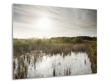 Everglades National Park, UNESCO World Heritage Site, Florida, USA, North America-Angelo Cavalli-Metal Print