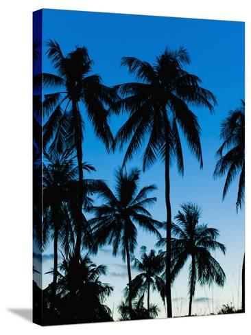 Palm Trees Silhouetted at Night, Sengiggi Beach, Lombok, Indonesia, Southeast Asia, Asia-Matthew Williams-Ellis-Stretched Canvas Print