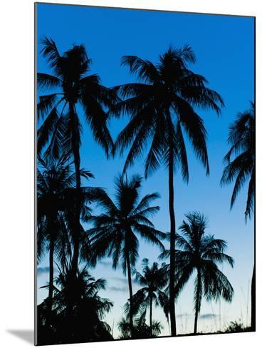 Palm Trees Silhouetted at Night, Sengiggi Beach, Lombok, Indonesia, Southeast Asia, Asia-Matthew Williams-Ellis-Mounted Photographic Print