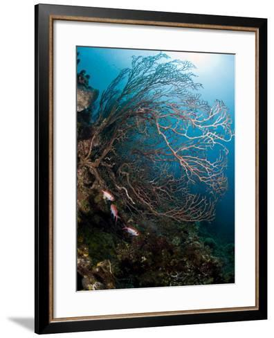 Reef Scene with Sea Fan, St. Lucia, West Indies, Caribbean, Central America-Lisa Collins-Framed Art Print
