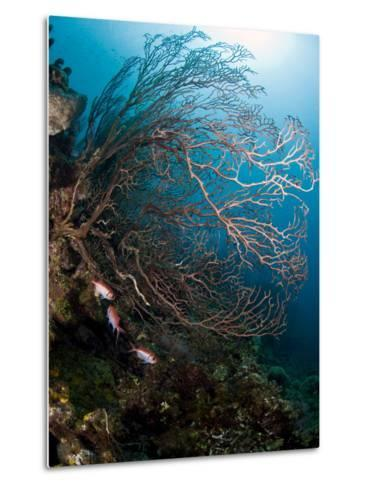 Reef Scene with Sea Fan, St. Lucia, West Indies, Caribbean, Central America-Lisa Collins-Metal Print