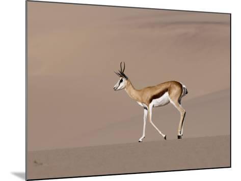 Springbok (Antidorcas Marsupialis) on Sand Dune, Skeleton Coast National Park, Namibia, Africa-Sergio Pitamitz-Mounted Photographic Print