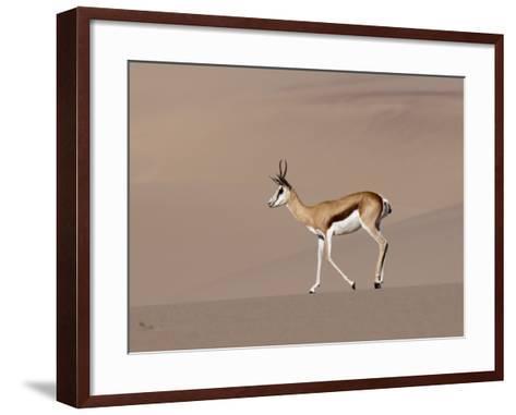 Springbok (Antidorcas Marsupialis) on Sand Dune, Skeleton Coast National Park, Namibia, Africa-Sergio Pitamitz-Framed Art Print