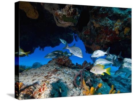 Fish, Cozumel, Mexico, Caribbean, North America-Antonio Busiello-Stretched Canvas Print