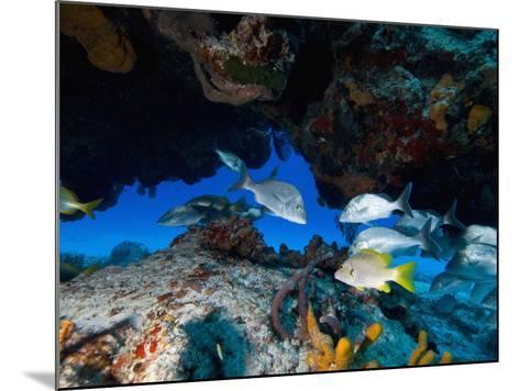 Fish, Cozumel, Mexico, Caribbean, North America-Antonio Busiello-Mounted Photographic Print