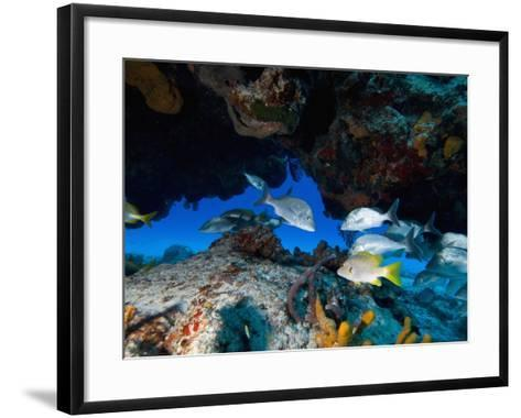Fish, Cozumel, Mexico, Caribbean, North America-Antonio Busiello-Framed Art Print